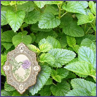 E.O.– Bergamot Mint