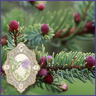 E.O.– Black Spruce