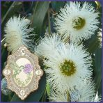 E.O.– Eucalyptus Globulus