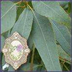 E.O.– Eucalyptus Staigeriana