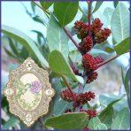 E.O.– Magnolia Flower