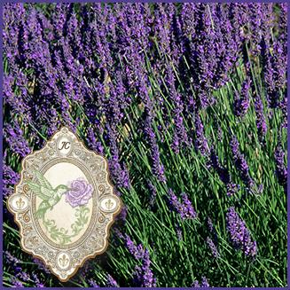 E.O.– Lavender angustifolia