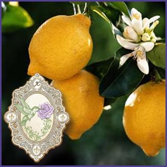 E.O.– Lemon