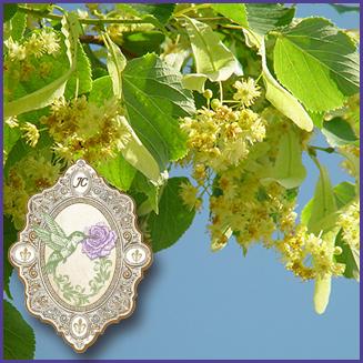 E.O.– Linden Blossom CO2