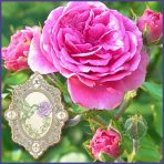 E.O.– Rose Absolute