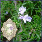 E.O.– Rosemary