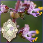 E.O.– Tulsi (Holy Basil)