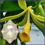 E.O.– Vanilla Bean