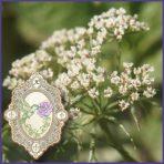 E.O.– Angelica Seed