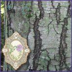 E.O.– Birch