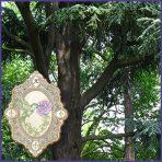 E.O.– Cedarwood Atlas