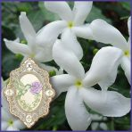 E.O.– Jasmine Absolute sambac