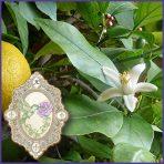 E.O.– Petitgrain (Lemon)
