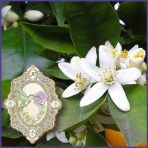 E.O.– Petitgrain Sur Fleurs