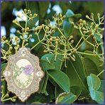 E.O.– Ravensara-aromatica