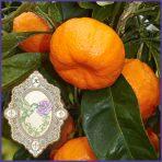 E.O.– Tangerine