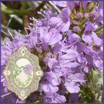 E.O.– Thyme satureiodes