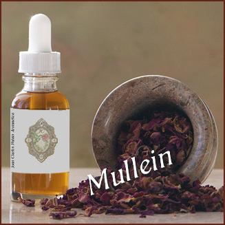Tincture– Mullein